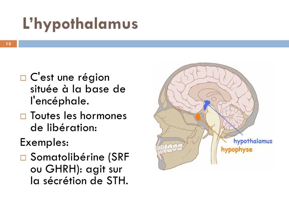 L'hypothalamus C est une région située à la base de l encéphale.