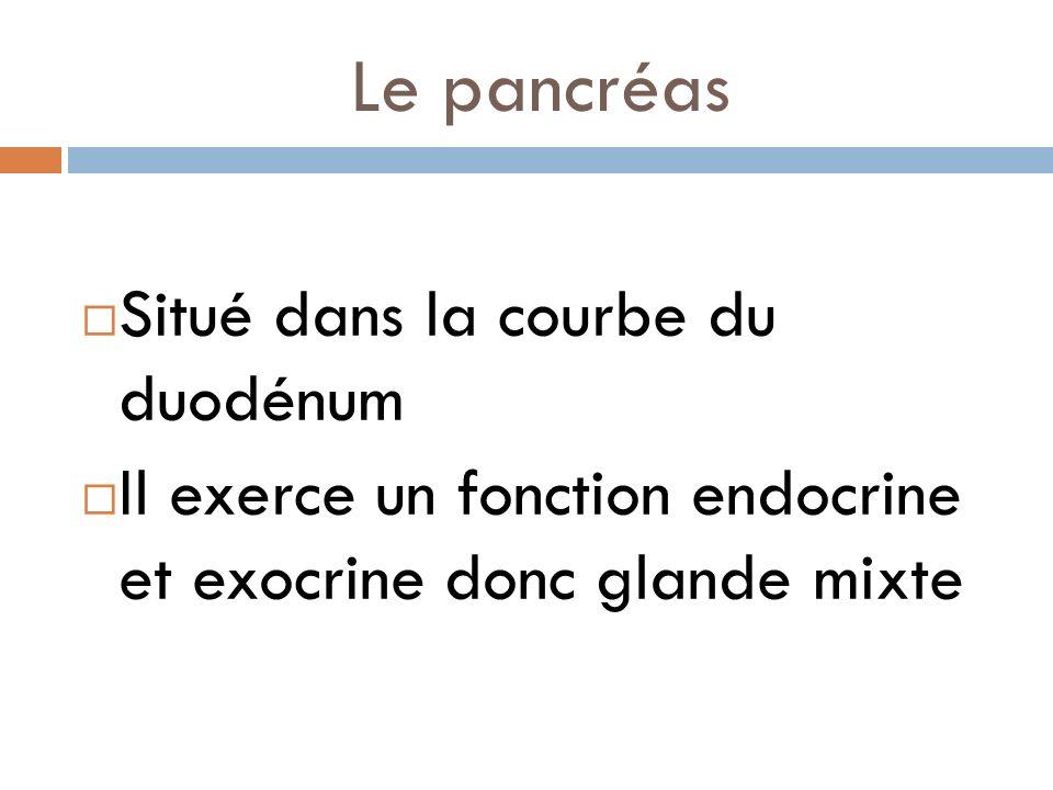Le pancréas Situé dans la courbe du duodénum