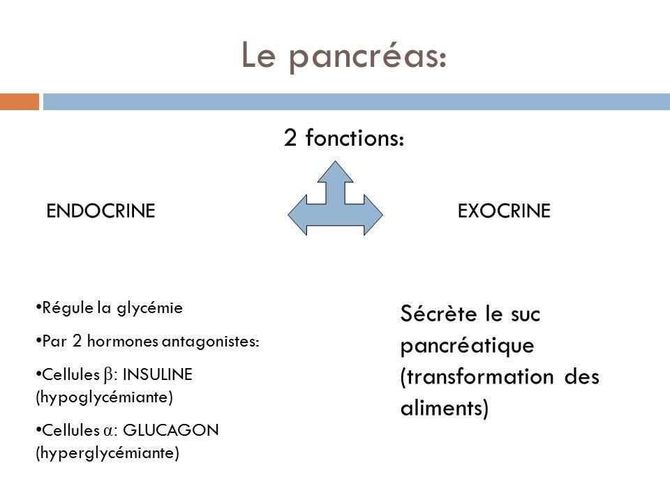 Le pancréas: 2 fonctions: