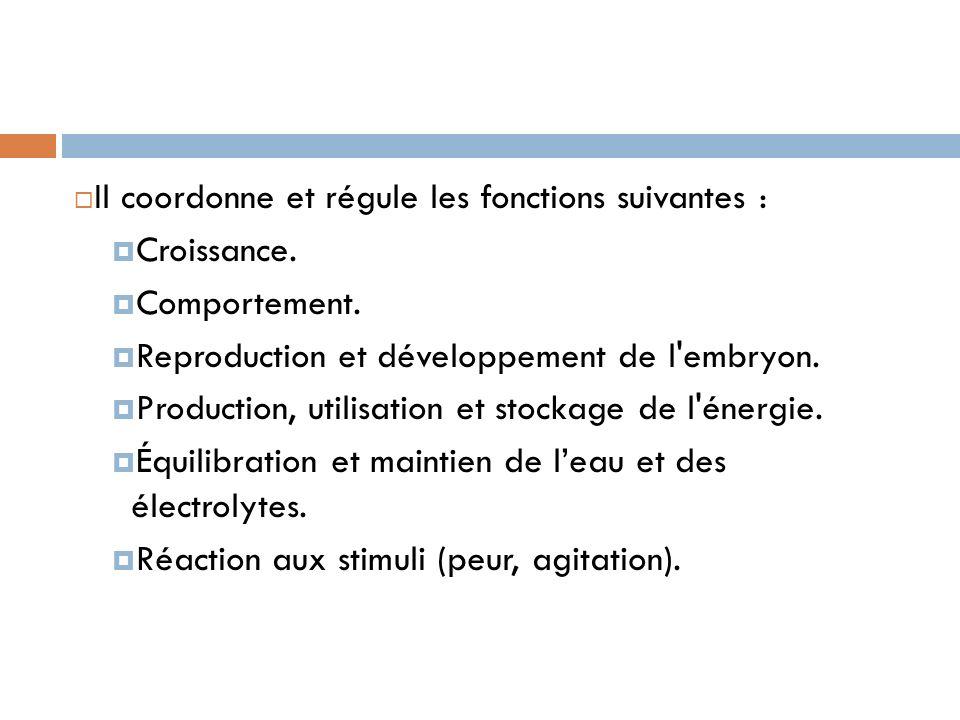 Il coordonne et régule les fonctions suivantes :