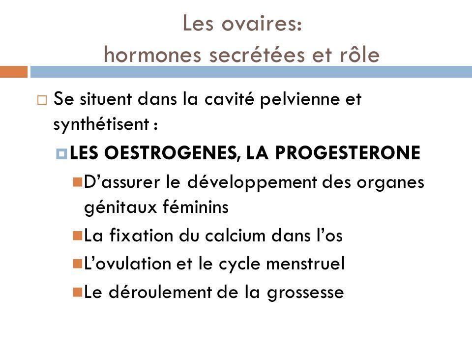 Les ovaires: hormones secrétées et rôle