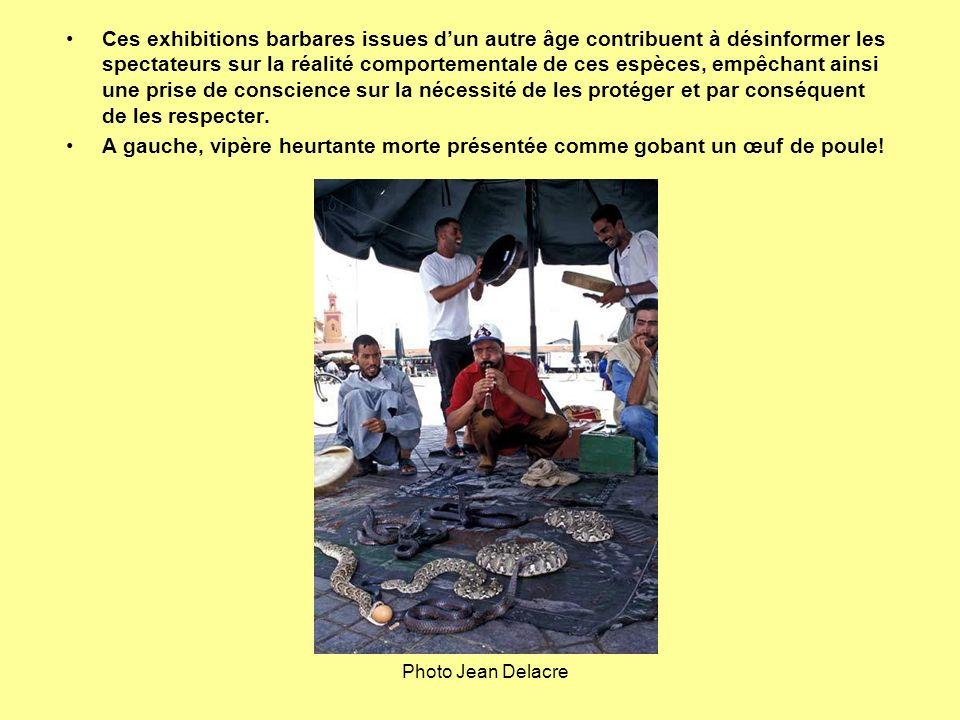 Ces exhibitions barbares issues d'un autre âge contribuent à désinformer les spectateurs sur la réalité comportementale de ces espèces, empêchant ainsi une prise de conscience sur la nécessité de les protéger et par conséquent de les respecter.