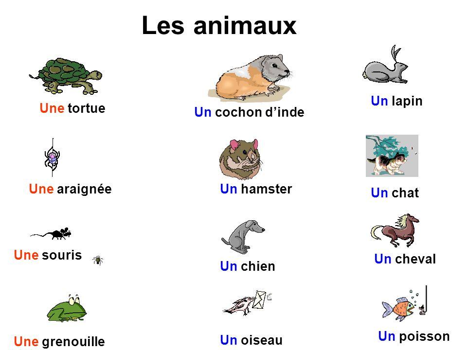 Les animaux Un lapin Une tortue Un cochon d'inde Une araignée