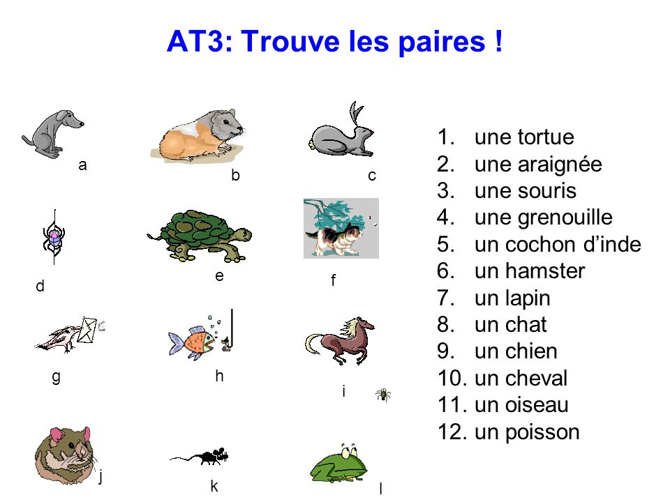AT3: Trouve les paires ! une tortue une araignée une souris