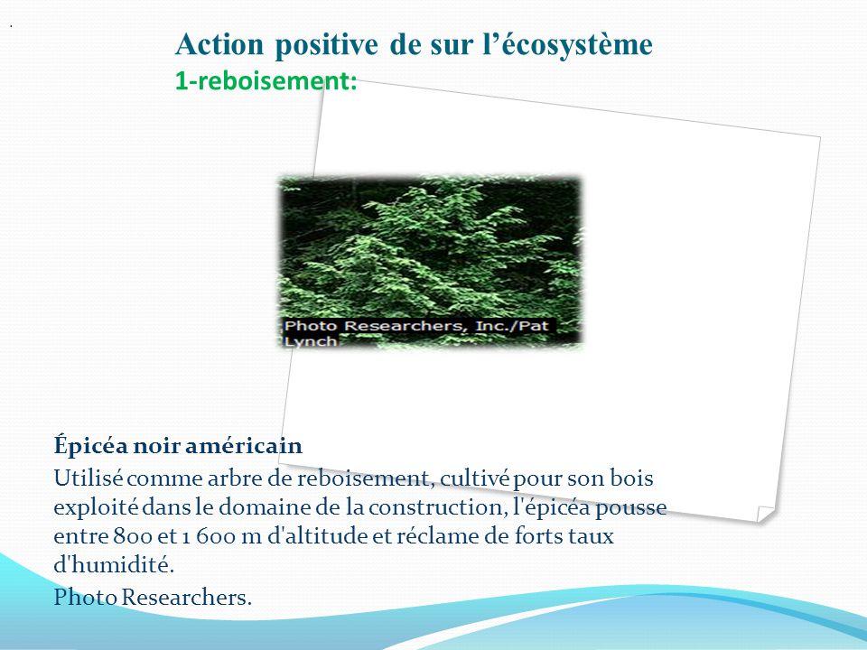 Action positive de sur l'écosystème 1-reboisement:
