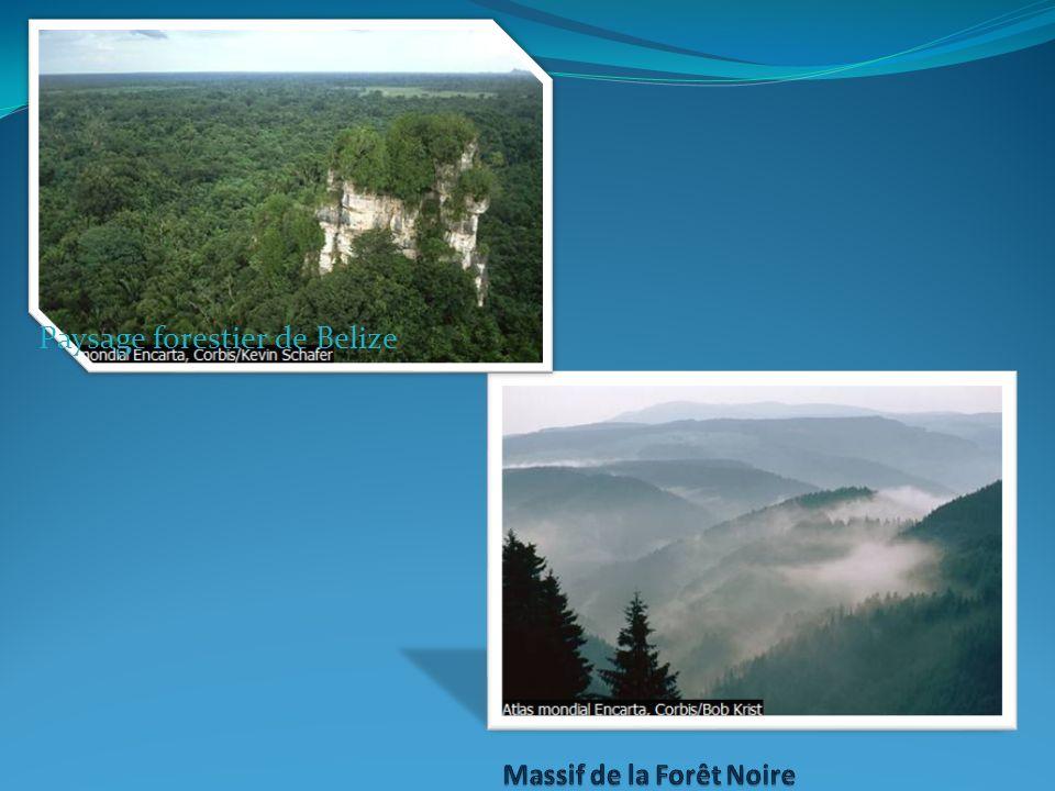 Massif de la Forêt Noire