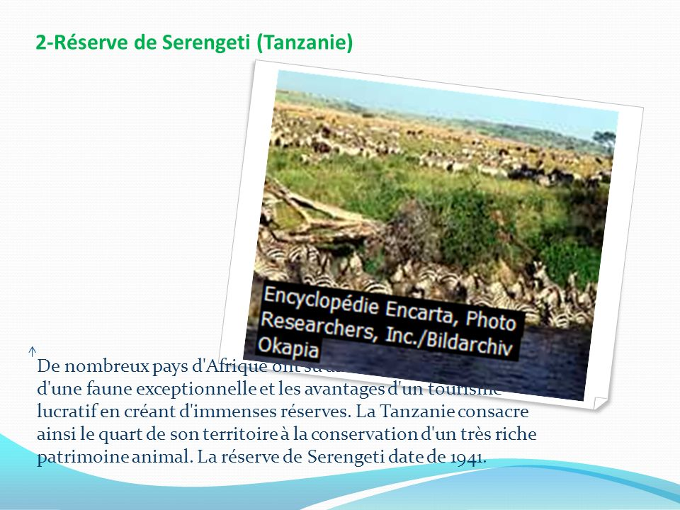 2-Réserve de Serengeti (Tanzanie)