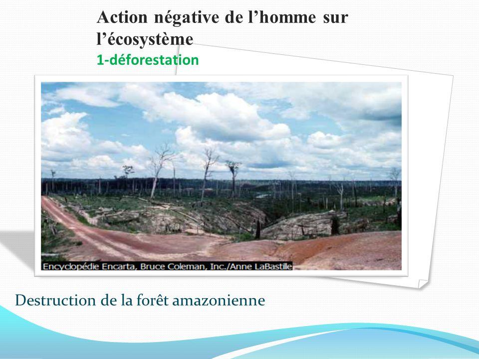 Action négative de l'homme sur l'écosystème 1-déforestation