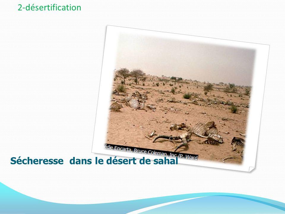 Sécheresse dans le désert de sahal