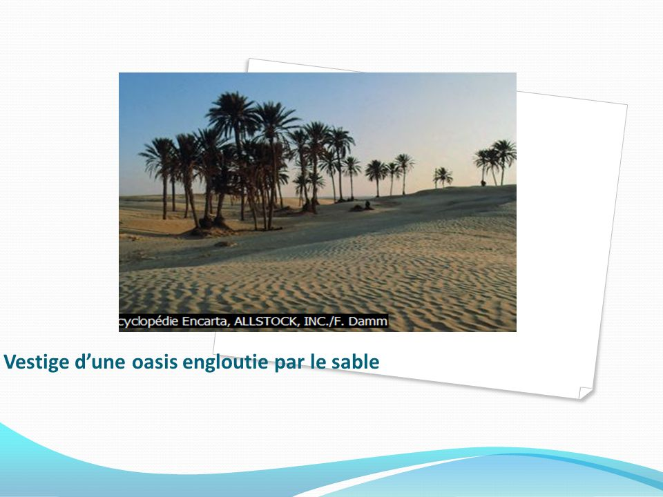 Vestige d'une oasis engloutie par le sable