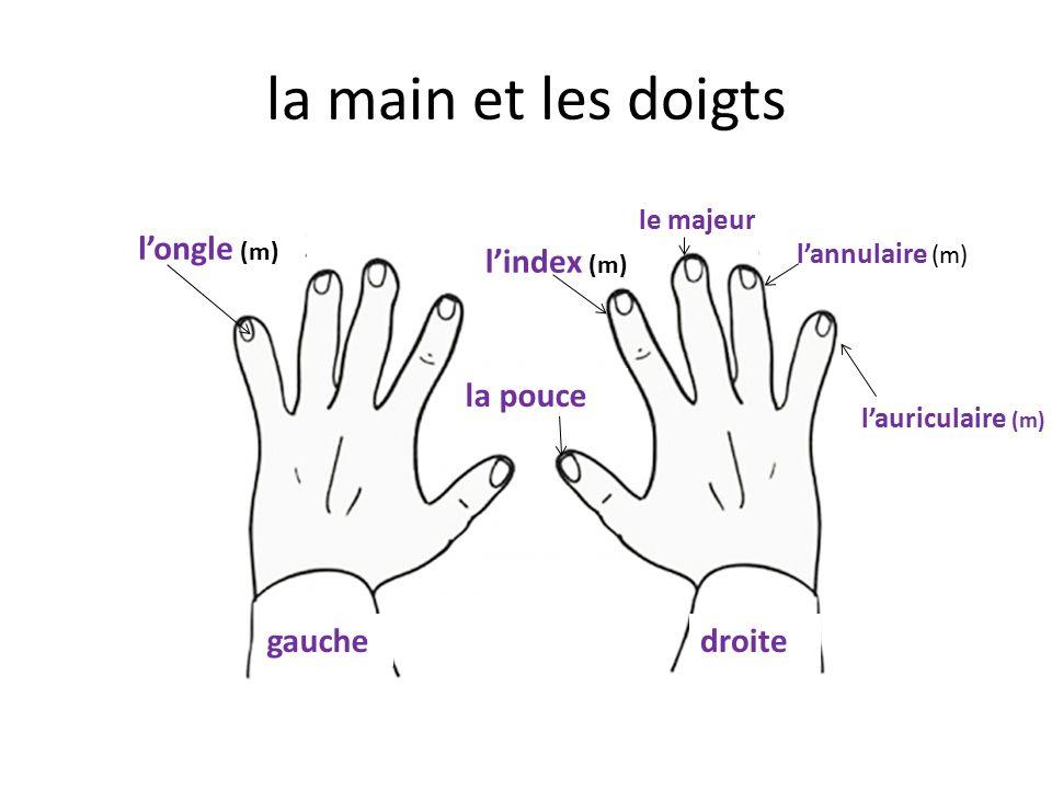 la main et les doigts l'ongle (m) l'index (m) la pouce gauche droite