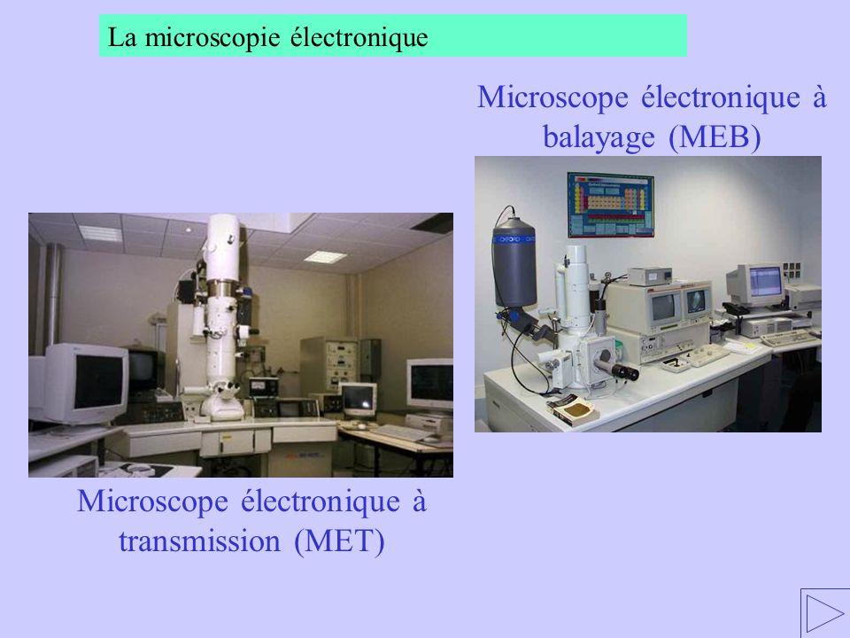 Microscope électronique à balayage (MEB)