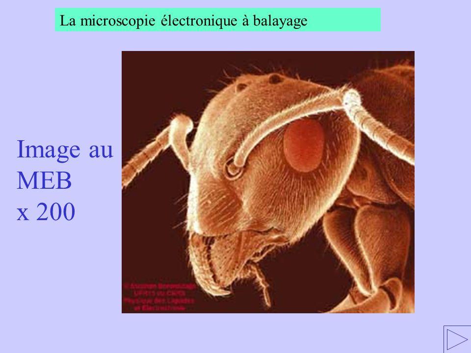 La microscopie électronique à balayage