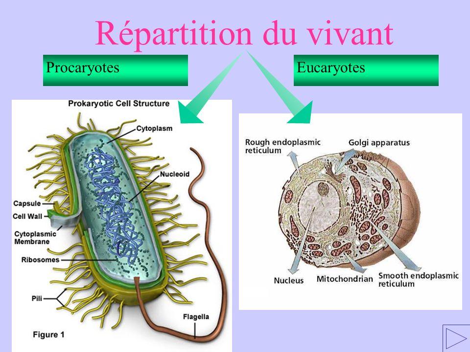 Répartition du vivant Procaryotes Eucaryotes