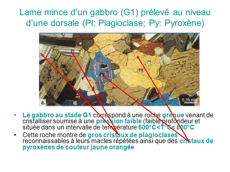 Lame mince d'un gabbro (G1) prélevé au niveau d'une dorsale (Pl: Plagioclase; Py: Pyroxène)