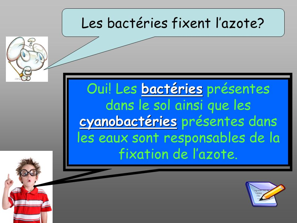 Les bactéries fixent l'azote