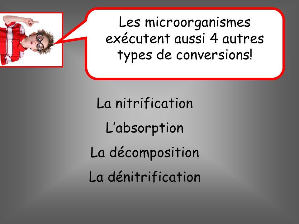 Les microorganismes exécutent aussi 4 autres types de conversions!