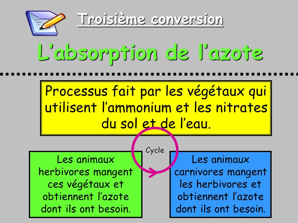L'absorption de l'azote