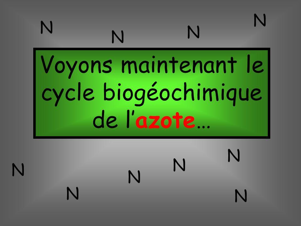 Voyons maintenant le cycle biogéochimique de l'azote…