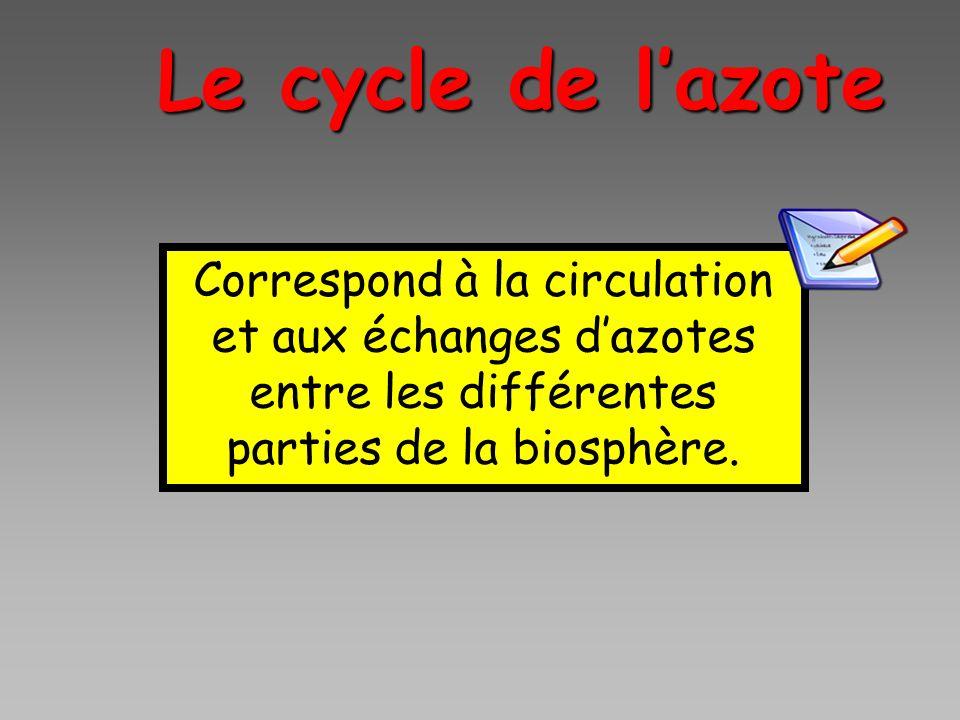 Le cycle de l'azote Correspond à la circulation et aux échanges d'azotes entre les différentes parties de la biosphère.