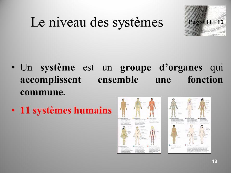 Le niveau des systèmes Pages 11 - 12. Un système est un groupe d'organes qui accomplissent ensemble une fonction commune.