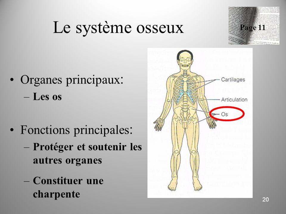 Le système osseux Organes principaux: Fonctions principales: Les os