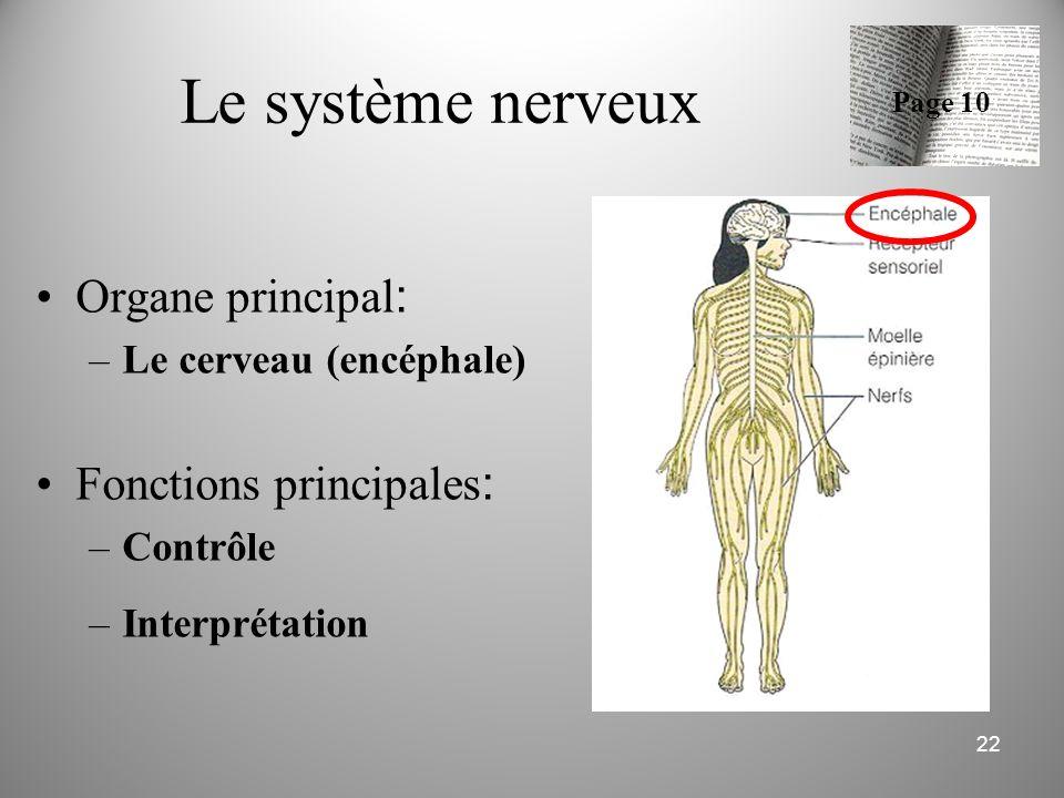 Le système nerveux Organe principal: Fonctions principales: