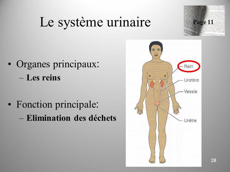 Le système urinaire Organes principaux: Fonction principale: Les reins