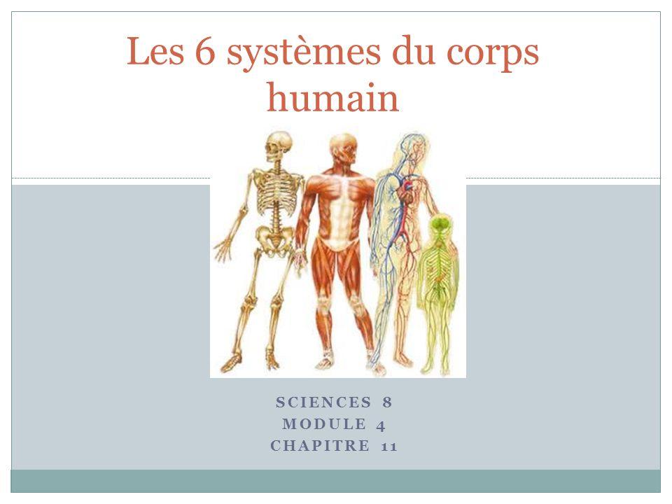 Les 6 systèmes du corps humain