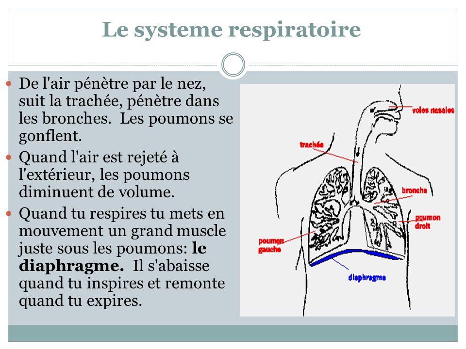 Le systeme respiratoire
