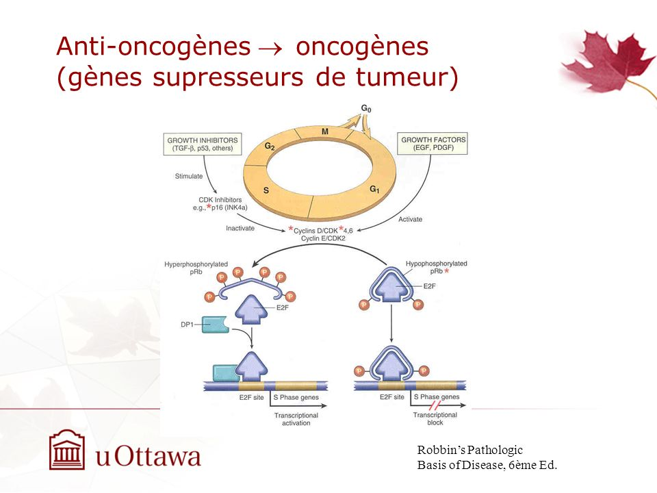 gene suppresseur de tumeur