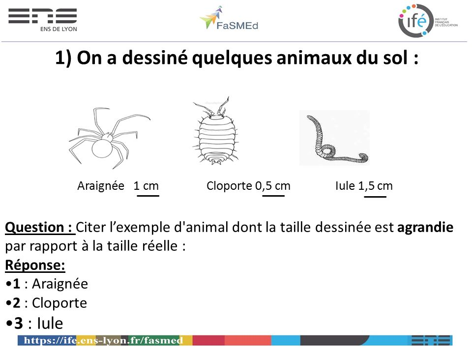 1) On a dessiné quelques animaux du sol :