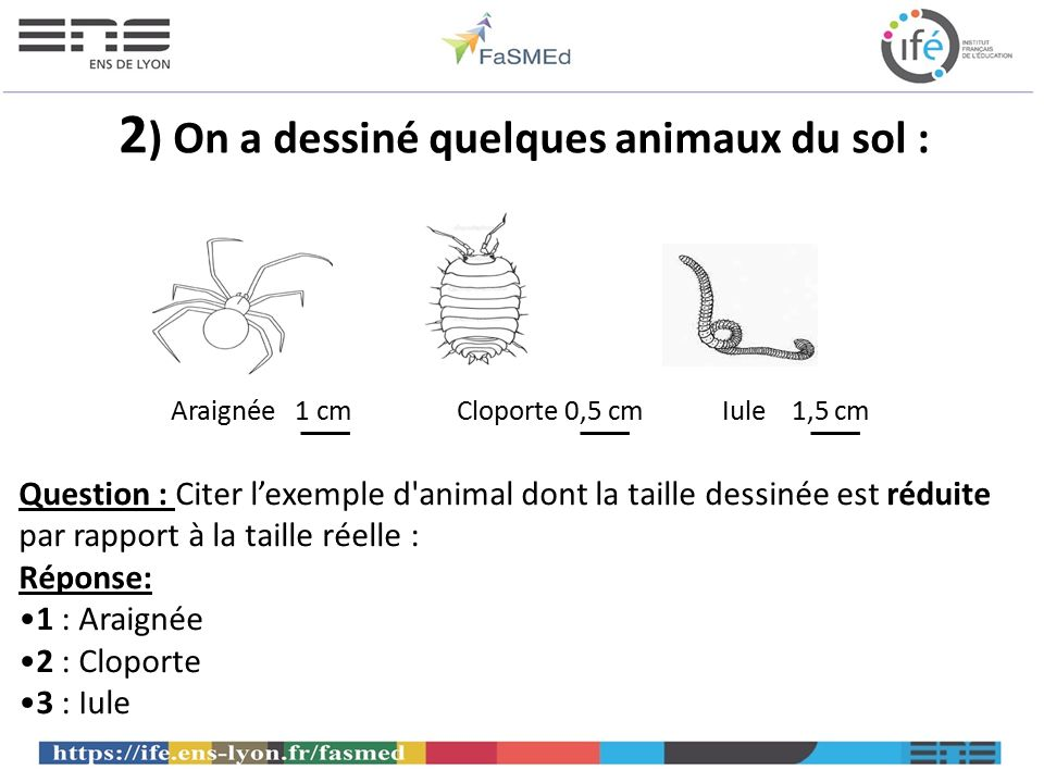 2) On a dessiné quelques animaux du sol :
