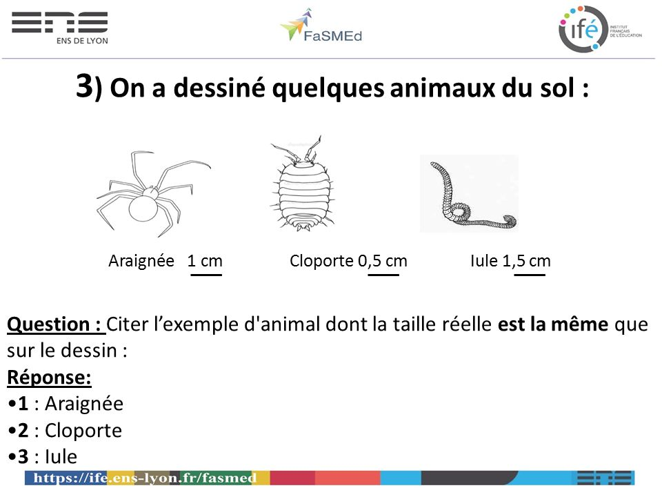 3) On a dessiné quelques animaux du sol :