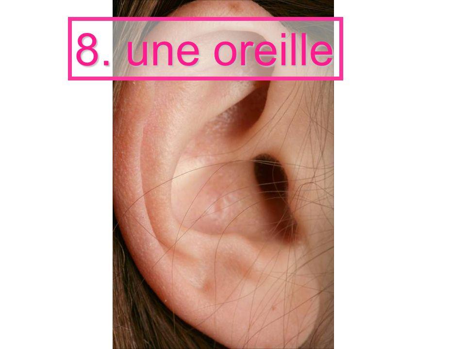 8. une oreille