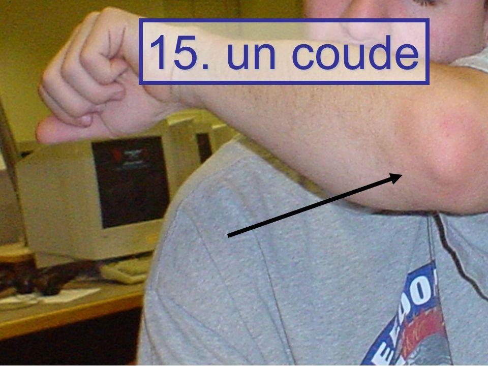 15. un coude