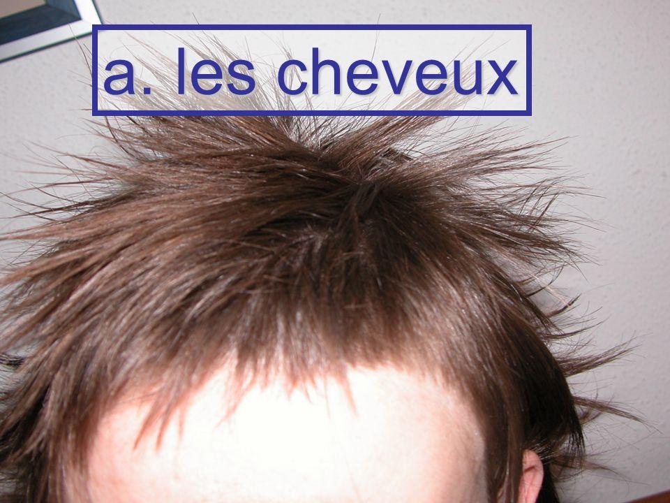 a. les cheveux