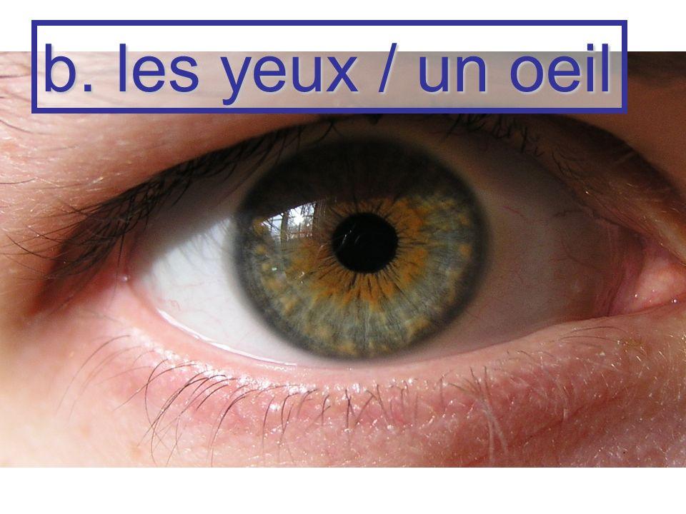 b. les yeux / un oeil