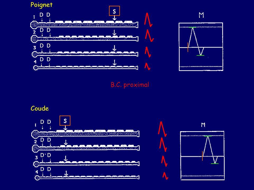 Poignet Coude B.C. proximal D D