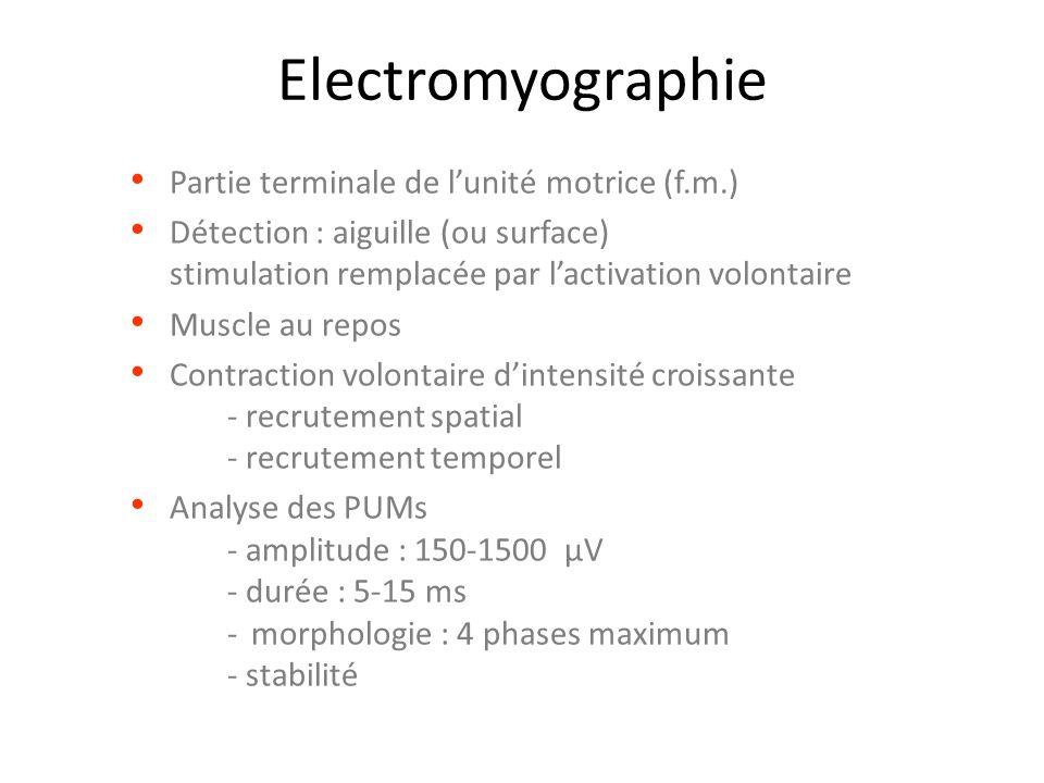 Electromyographie Partie terminale de l'unité motrice (f.m.)