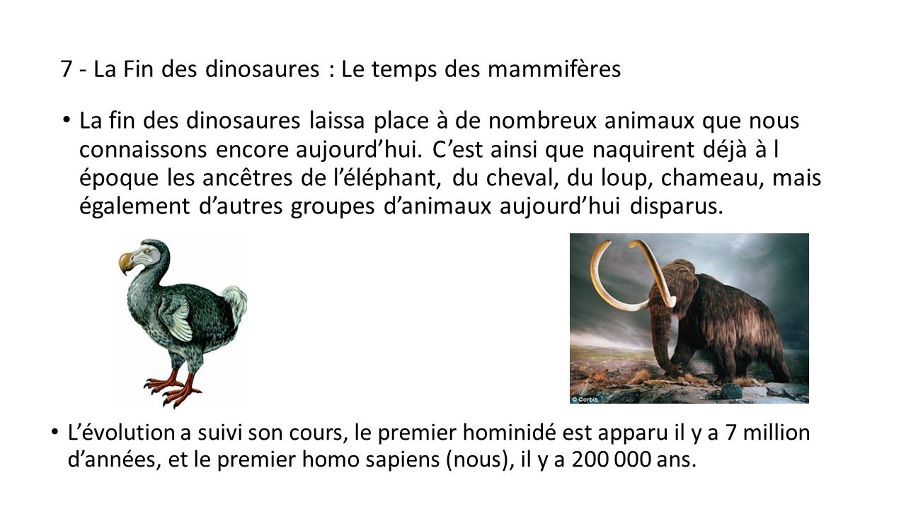 les dinosaures 1 qu est ce qu un dinosaure ppt video online t l charger. Black Bedroom Furniture Sets. Home Design Ideas