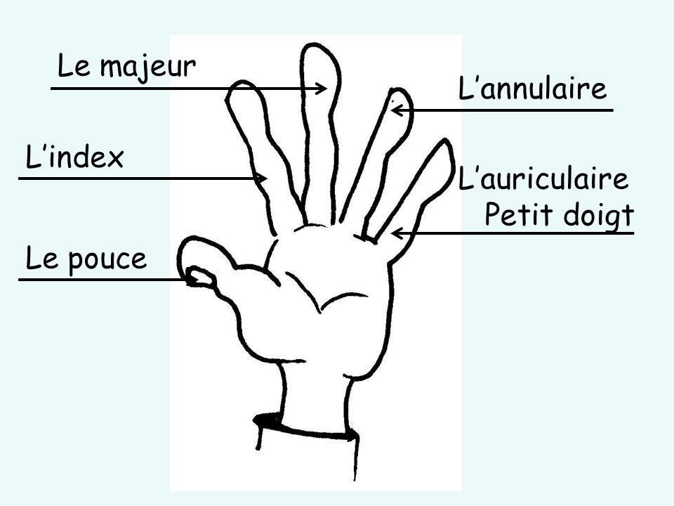 Le majeur L'annulaire L'index L'auriculaire Petit doigt Le pouce