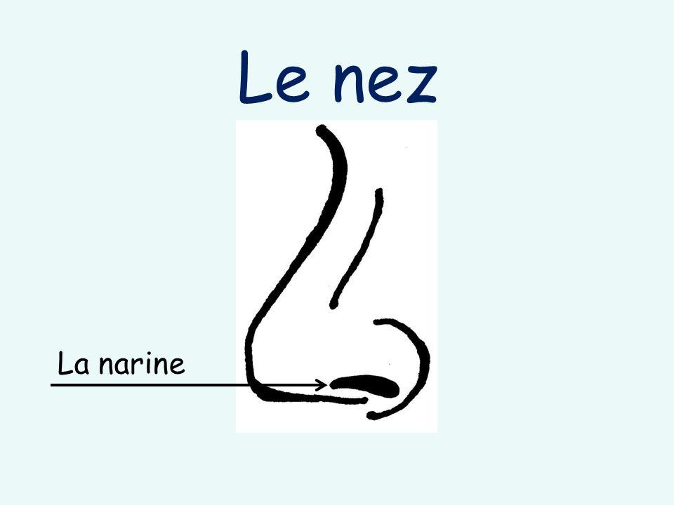 Le nez La narine