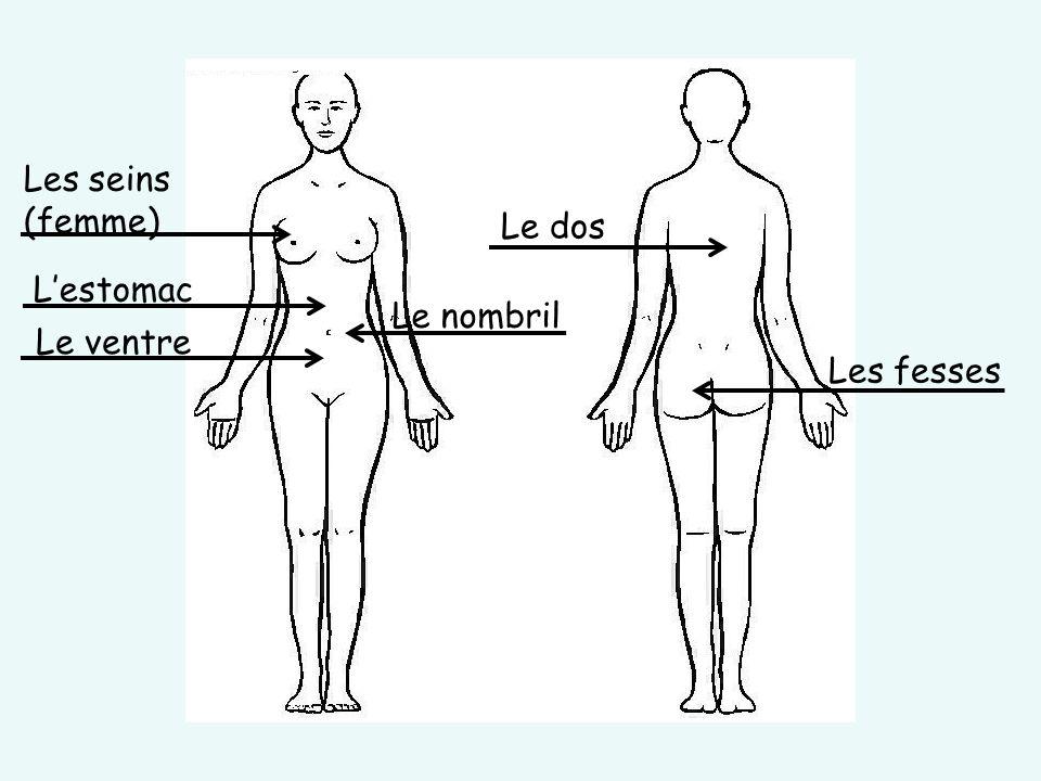 Les seins (femme) Le dos L'estomac Le nombril Le ventre Les fesses