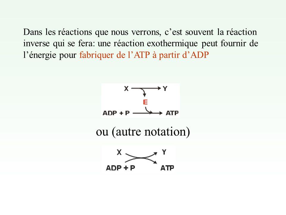 Dans les réactions que nous verrons, c'est souvent la réaction inverse qui se fera: une réaction exothermique peut fournir de l'énergie pour fabriquer de l'ATP à partir d'ADP