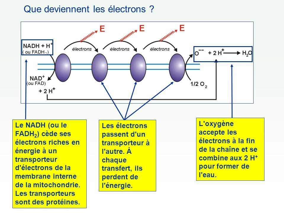 Que deviennent les électrons