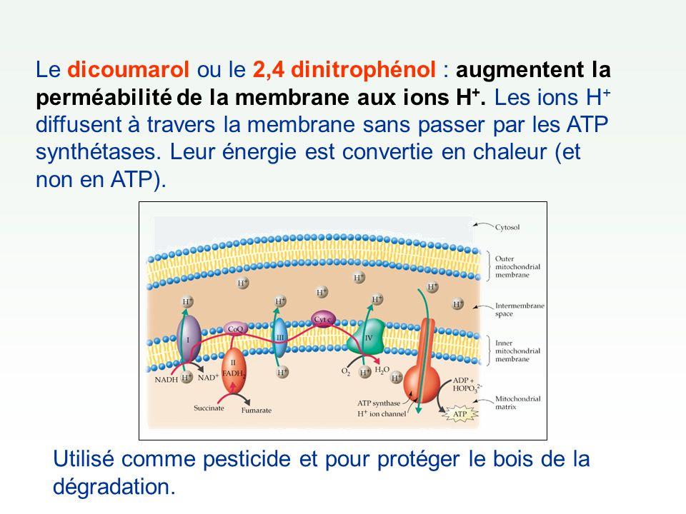 Le dicoumarol ou le 2,4 dinitrophénol : augmentent la perméabilité de la membrane aux ions H+. Les ions H+ diffusent à travers la membrane sans passer par les ATP synthétases. Leur énergie est convertie en chaleur (et non en ATP).