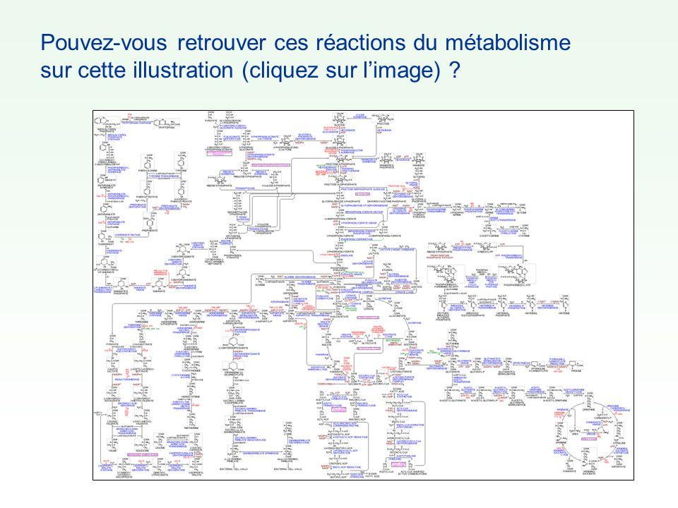 Pouvez-vous retrouver ces réactions du métabolisme sur cette illustration (cliquez sur l'image)