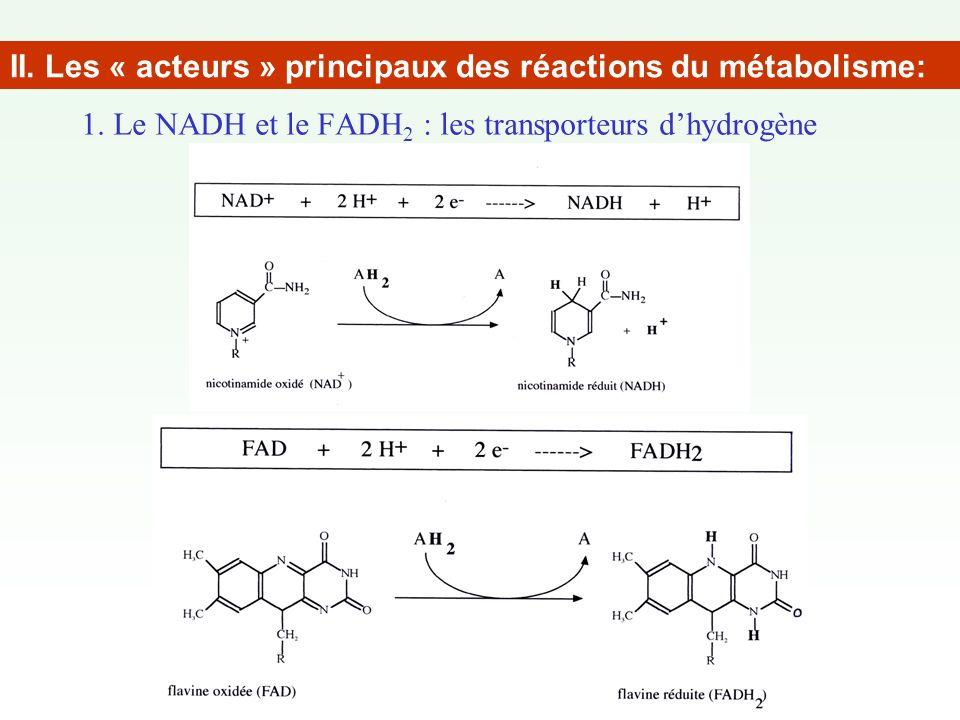 1. Le NADH et le FADH2 : les transporteurs d'hydrogène