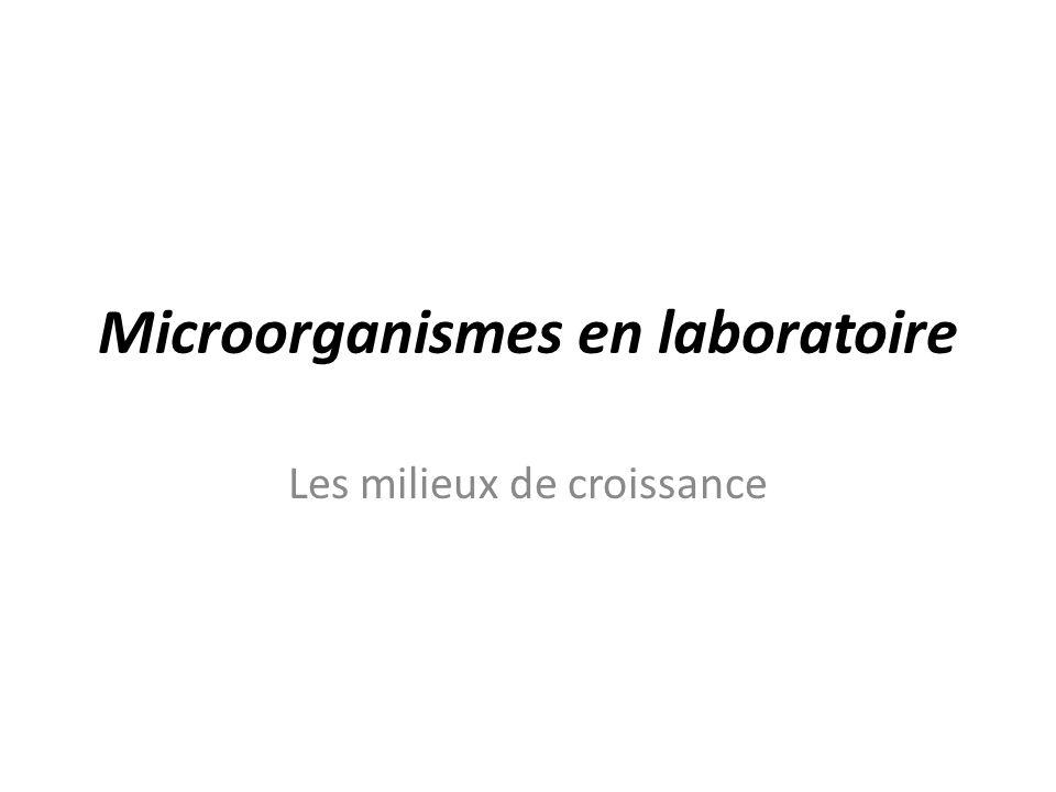 Microorganismes en laboratoire